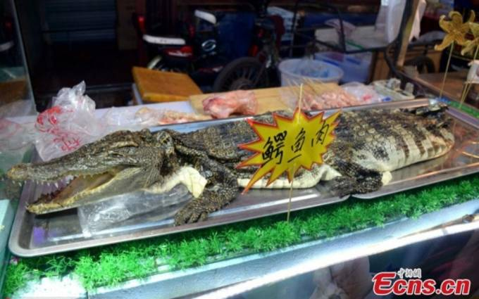 BBQ booth touts crocodile meat