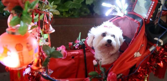 """Senior turns baby stroller into """"royal carriage"""" for pet dog"""